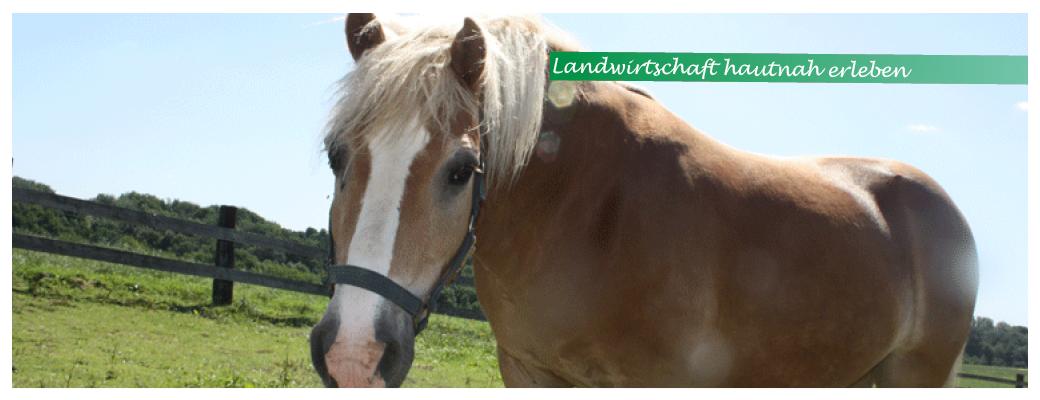 Startseite-Slider-Bauerngut-entdecken_Pferd